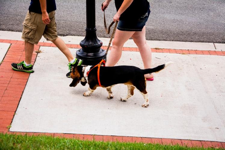 Dog rs