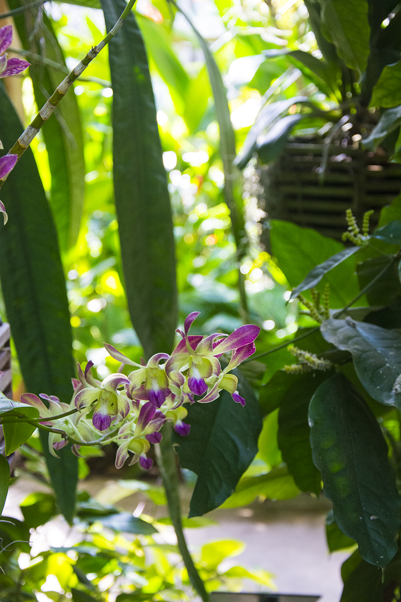 orchids-rs