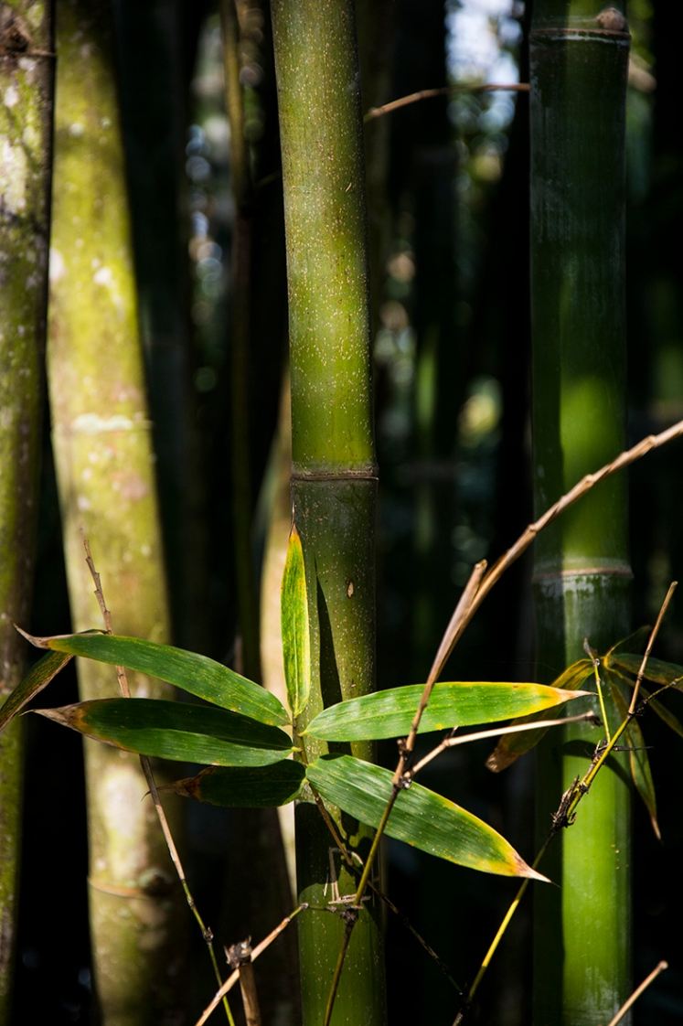 bamboo-1-rs