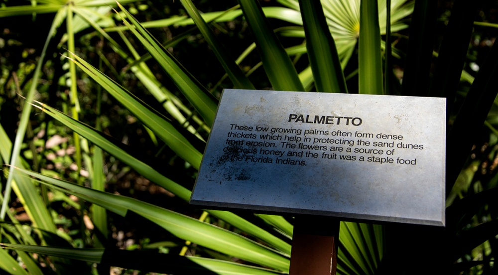 palmetto-2-cropped-rs