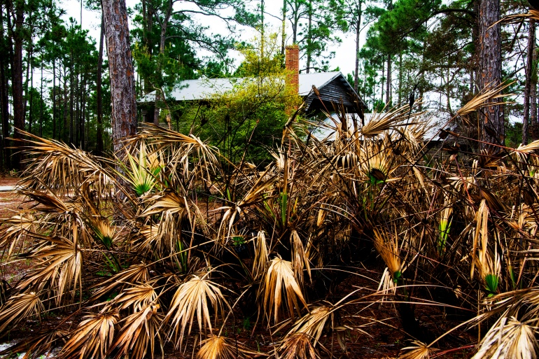 turpentine-factory-saw-palmetto