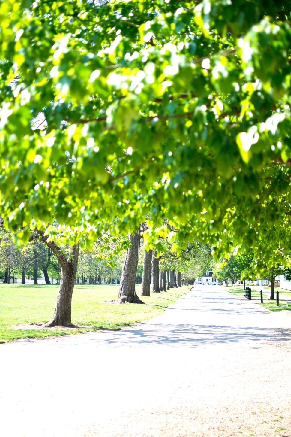 williamsburg-street-trees-rs